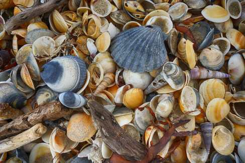 seashells on the seashore - Kelvedon Beach Tasmania