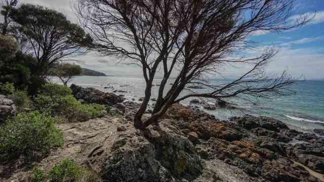 tasmania-east-coast-great-oyster-bay