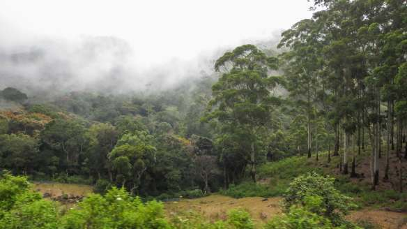 cultivated fields in the Horton Plains cloud forest