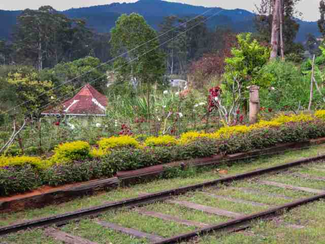 flower bed - Diyathalawa station