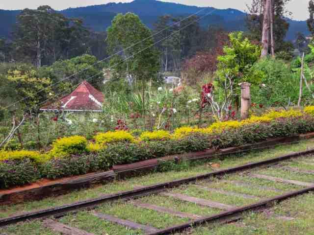 flower bed - Diyathalawa station