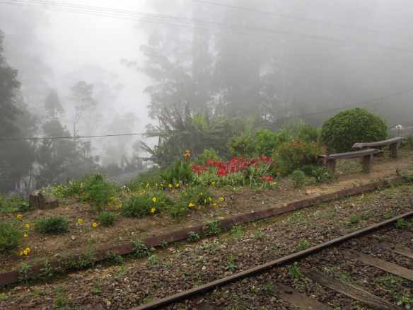 Sri Lanka tea country - flower bed on the side of the rail tracks