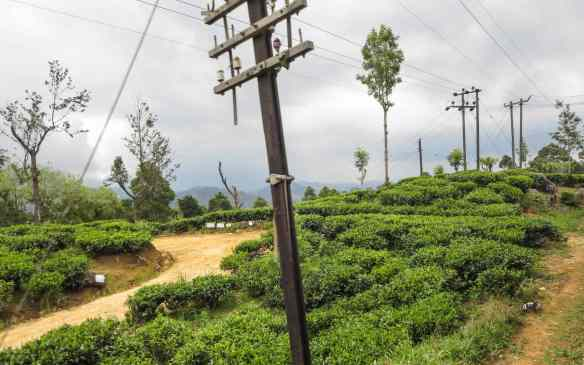 more tea plantations east of Haputale.jpg