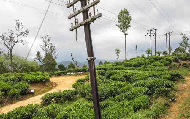 more tea plantations east of Haputale.jpg