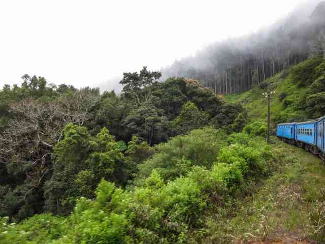 passing through the cloud forest of the Sri Lankan highlands.jpg