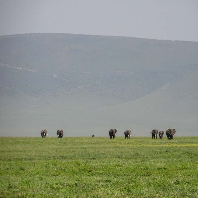 a line of elephants in the distance at Ngorongoro Crater