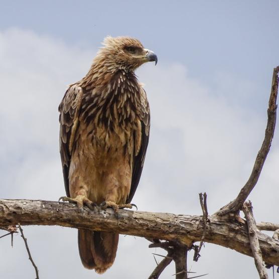 Ngorongoro bird -