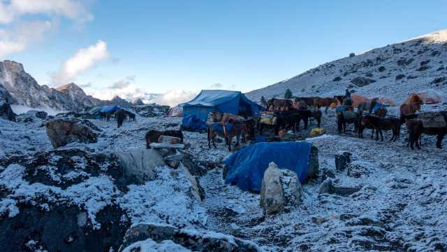 Narethang camp in the morning
