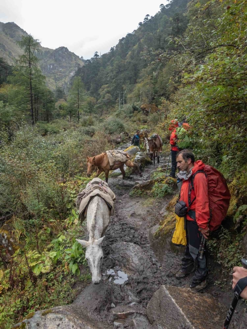the trail to Thangthangka - letting a local horse train pass by